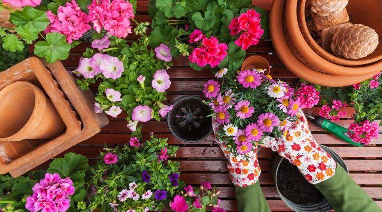 aplicaciones para cuidar plantas